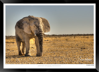 Elephants_of_Etosha_-_005_-_©_Jonathan_v