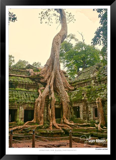 Trees of Angkor Thom - 025 - Jonathan va