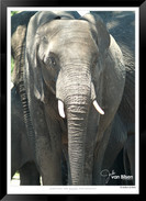 Elephants_of_the_Serengeti_-_006_-_©_Jo