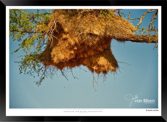 Birds_of_Namibia_-_006_-_©_Jonathan_van