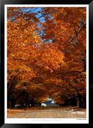 Autumn Farm - IOPP-069 - Jonathan van Bi