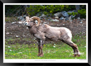 Beasts_of_Canada_-_005_-_©_Jonathan_van