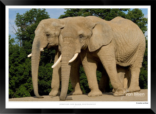 Elephants_of_the_Serengeti_-_008_-_©_Jo