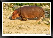Images of East Africa - 006 - © Jonathan van Bilsen.jpg