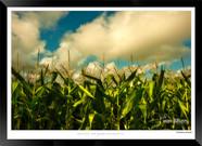 Autumn Harvest  - IOPP-073 - Jonathan va