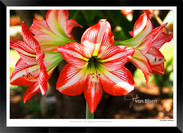 Images_of_Costa_Rica_-_007_-_©_Jonathan_