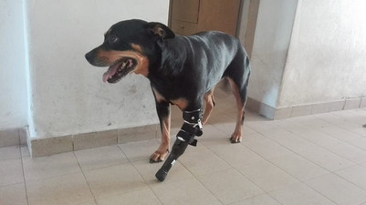 Rott y su protesis