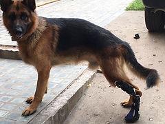 contine la pisada en la fora correcta con una protesis