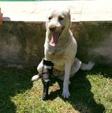 Blanca con su protesis