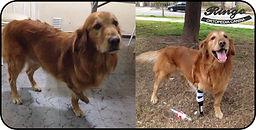 Perro amputado con su protesis
