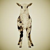Animal Series Lamb Square SOCIAL MEDIA.j