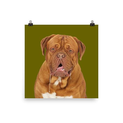 Art Print · Project 100 Dogs · Thor the Dogue de Bordeaux
