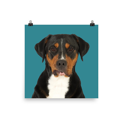 Art Print · Project 100 Dogs · Gilbert the Greater Swiss Mountain Dog