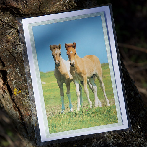 Greeting Card with Envelope - Icelandic Foals