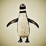 Animal Series Penguin Square SOCIAL MEDI