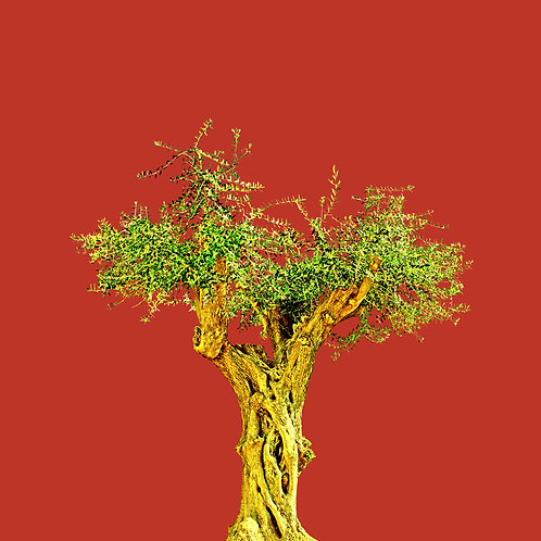 Tree no_6