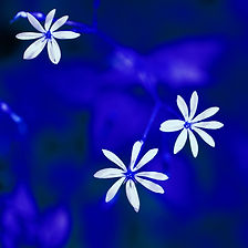 White_in_Colors_Blue_·_Pernille_Westh.jp