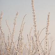 Hoar Frost White Pernille Westh.jpg