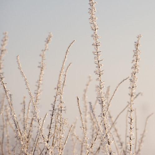 Hoar Frost · White