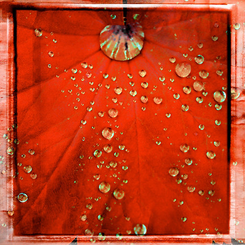Water Drops · Red