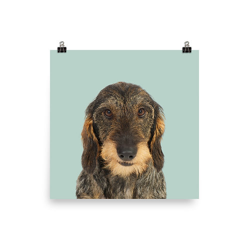 Art Print · Project 100 Dogs · Ludvig the Wire-haired Dachshund