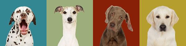 Pernille Westh_Project 100 Dogs kopi.jpg