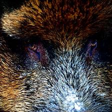 Northern Mood_Wild Boar_Pernille Westh.j