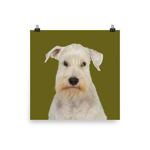 Art Print · Project 100 Dogs · Boogi the Miniature Schnauzer