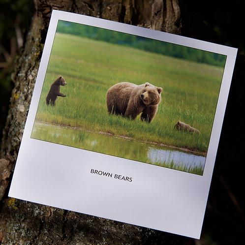 Greeting Card - Brown Bears