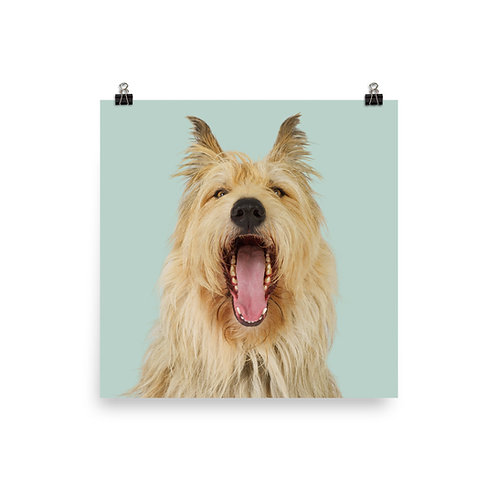 Art Print · Project 100 Dogs · Einstein the Berger Picard