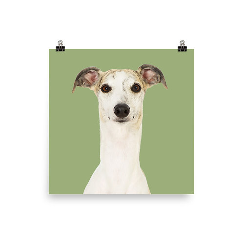 Art Print · Project 100 Dogs · Hugo the Whippet