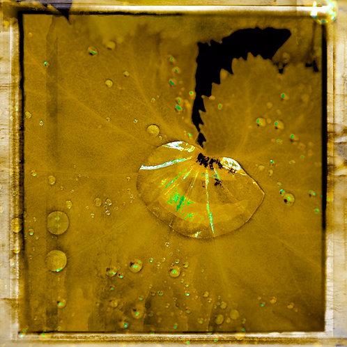 Water Drops · Yellow