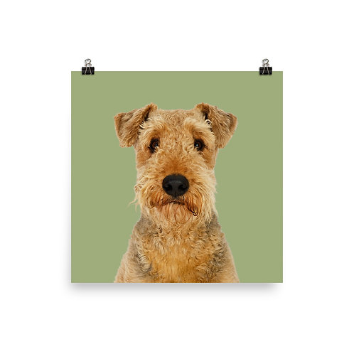 Art Print · Project 100 Dogs · Rusty the Airedale Terrier