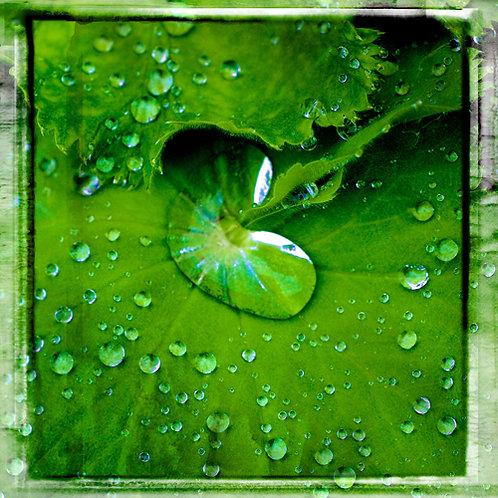 Water Drops · Green