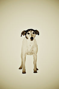 Animal Series Dog small file Wix Gallery