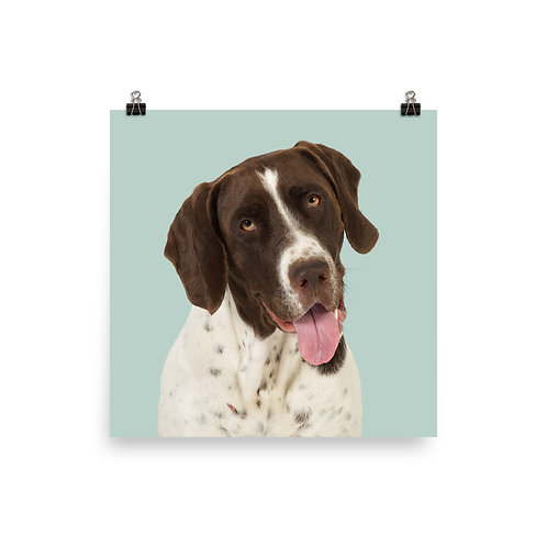 Art Print · Project 100 Dogs · Tøsen the Old Danish Pointer