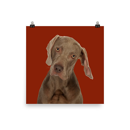 Art Print · Project 100 Dogs · Billy the Weimaraner