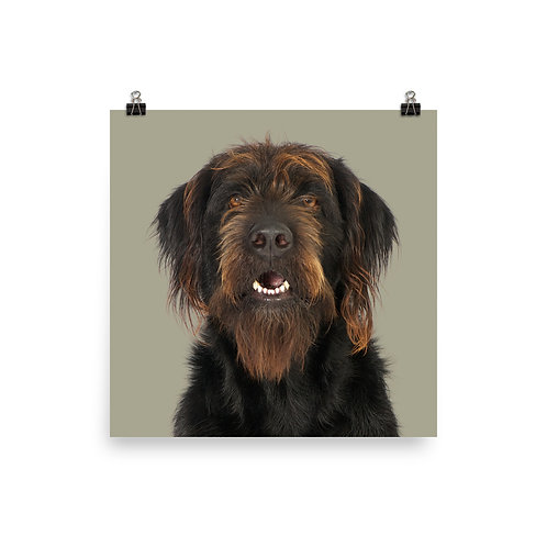 Art Print · Project 100 Dogs · Rufus the Cross-breed