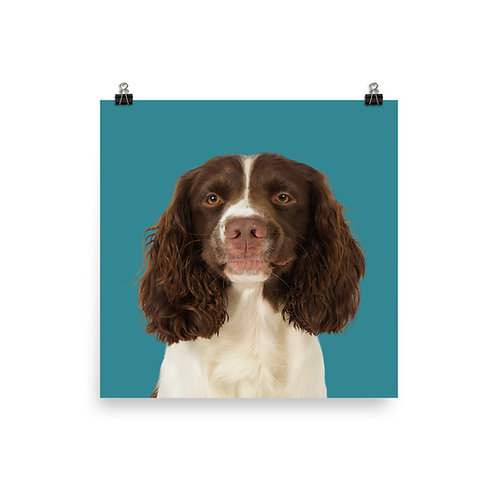 Art Print · Project 100 Dogs · Barney the English Springer Spaniel