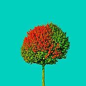 18_Tree_no4.jpg