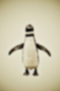 Animal Series Penguin small file Wix Gal