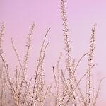 Hoar Frost Pink Pernille Westh.jpg