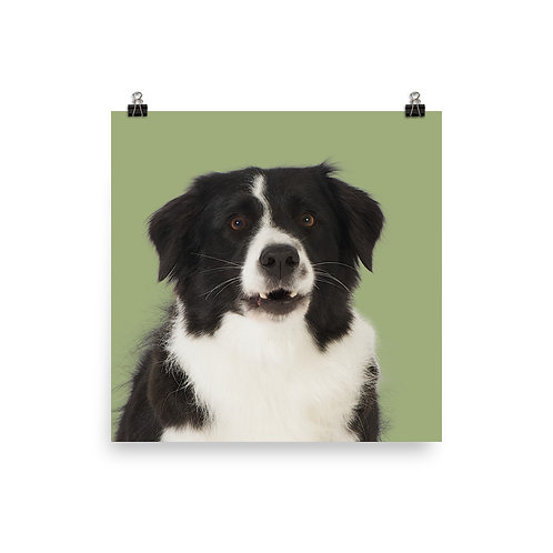 Art Print · Project 100 Dogs · Nuggi the Border Collie