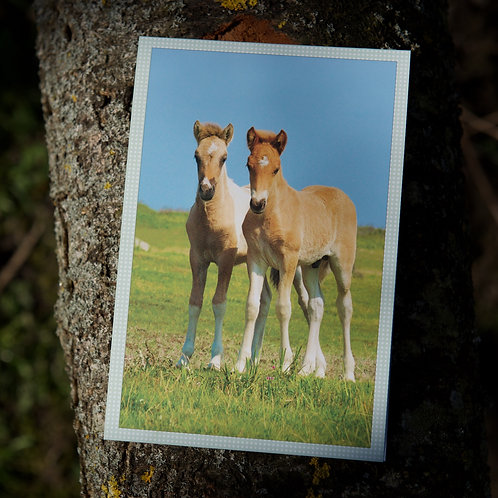 Greeting Card - Icelandic Foals