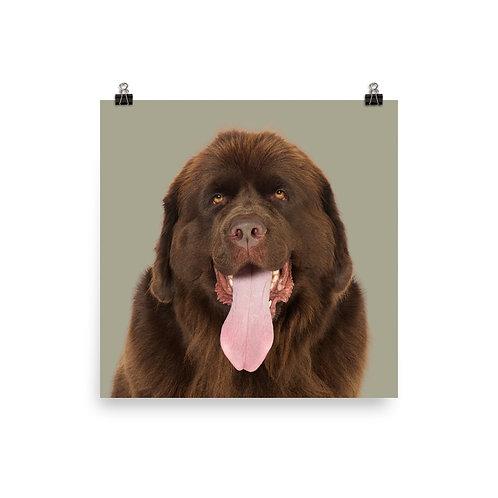 Art Print · Project 100 Dogs · Tessa the Newfoundland