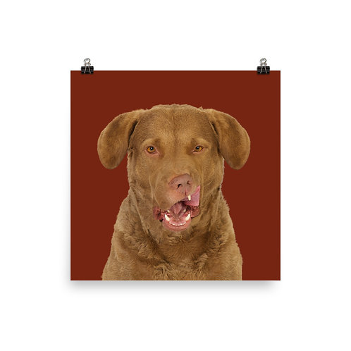 Art Print · Project 100 Dogs · Skipper the Chesapeake Bay Retriever