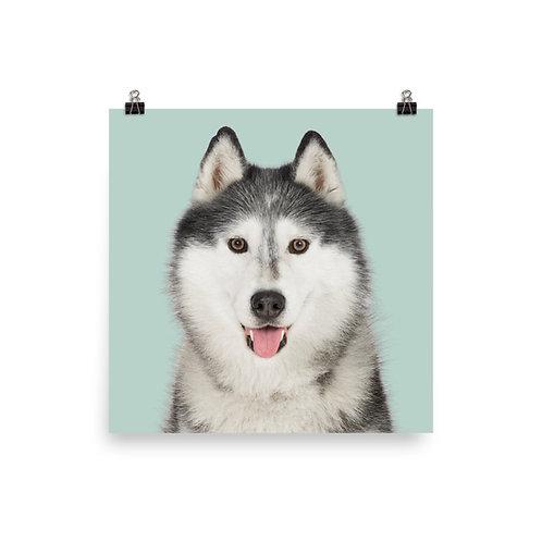 Art Print · Project 100 Dogs · Sanasok the Siberian Husky