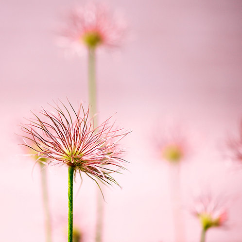 Forest of Flowers · Pink