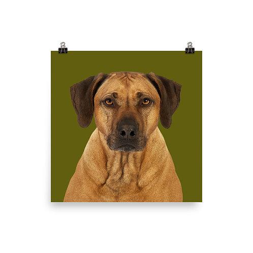 Art Print · Project 100 Dogs · Balou the Rhodesian Ridgeback
