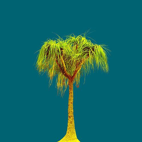 Tree no_2